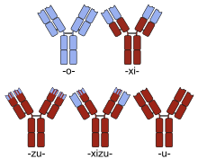 TNF-α-ellenes kezelés rheumatoid arthritisben | eLitMed