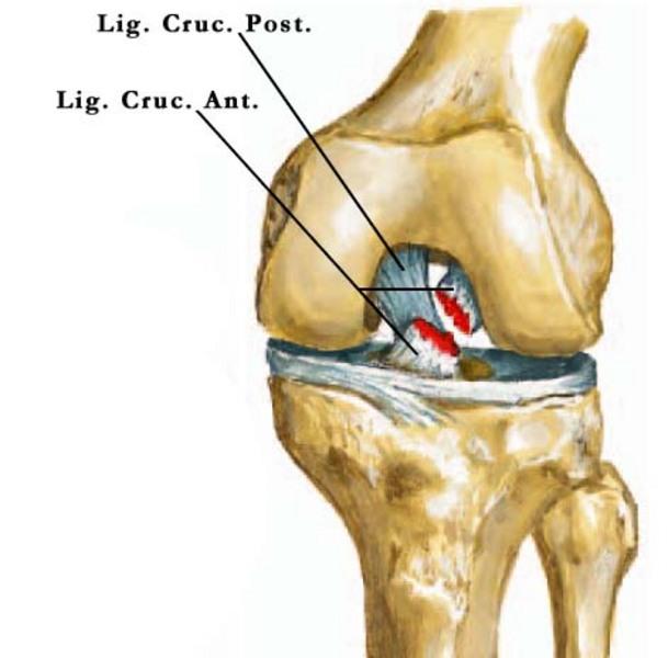 az akut vállfájdalom oka csavarja lábak fájó ízületek