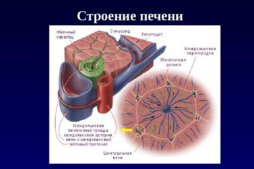 Mi a gerinc szubkondrális szklerózisa