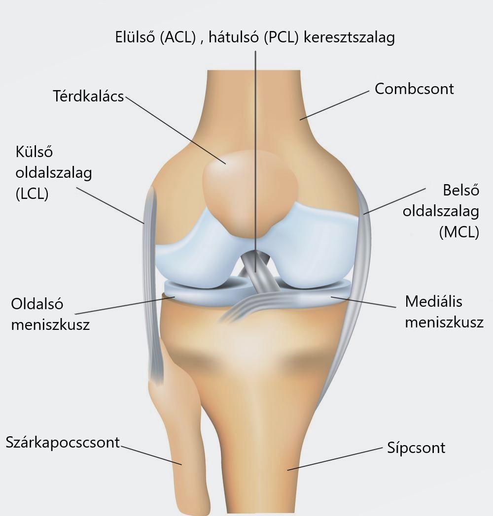 Repülés a térd meniscusában