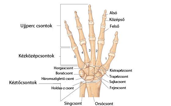a jobb térdízület deformáló artrózisa 1 fokos az ujjízületek fiataloknál fájnak